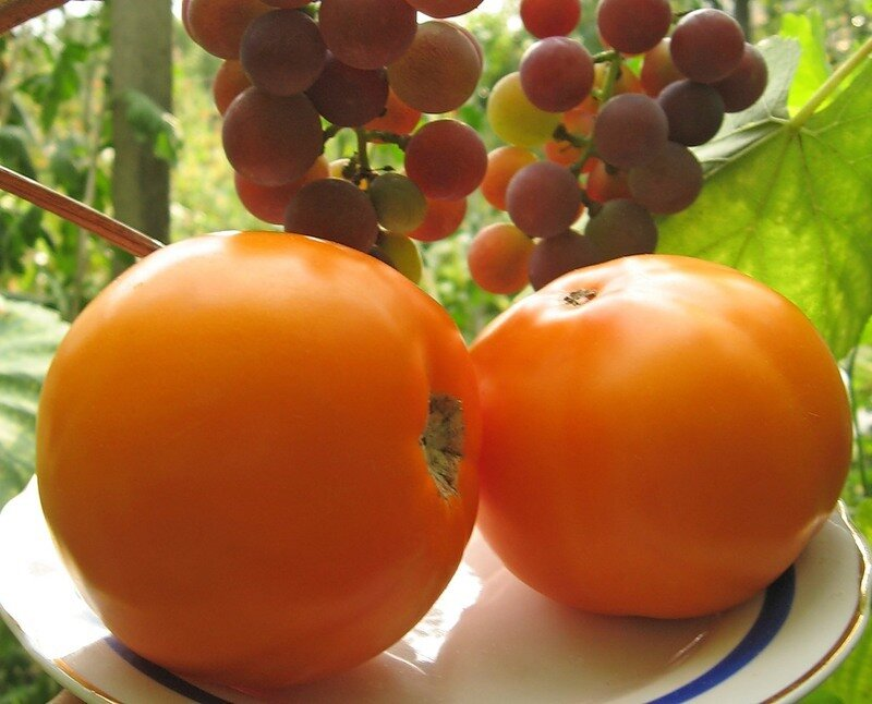 oranzhevye-tomaty-6.jpg