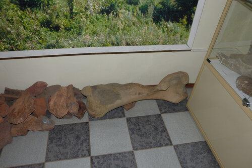 Кость мамонта