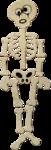 NLD Skeleton.png