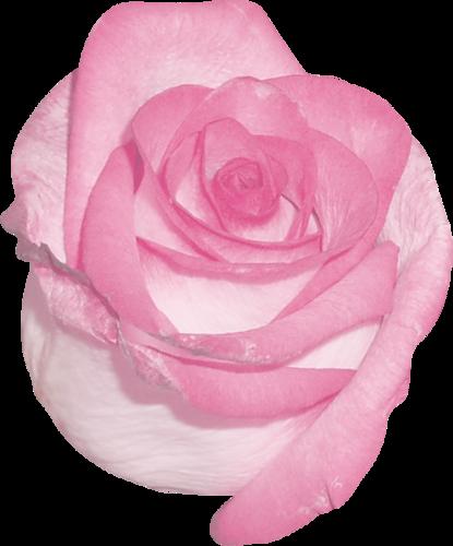 «sweet romance» 0_95583_e2700b06_L