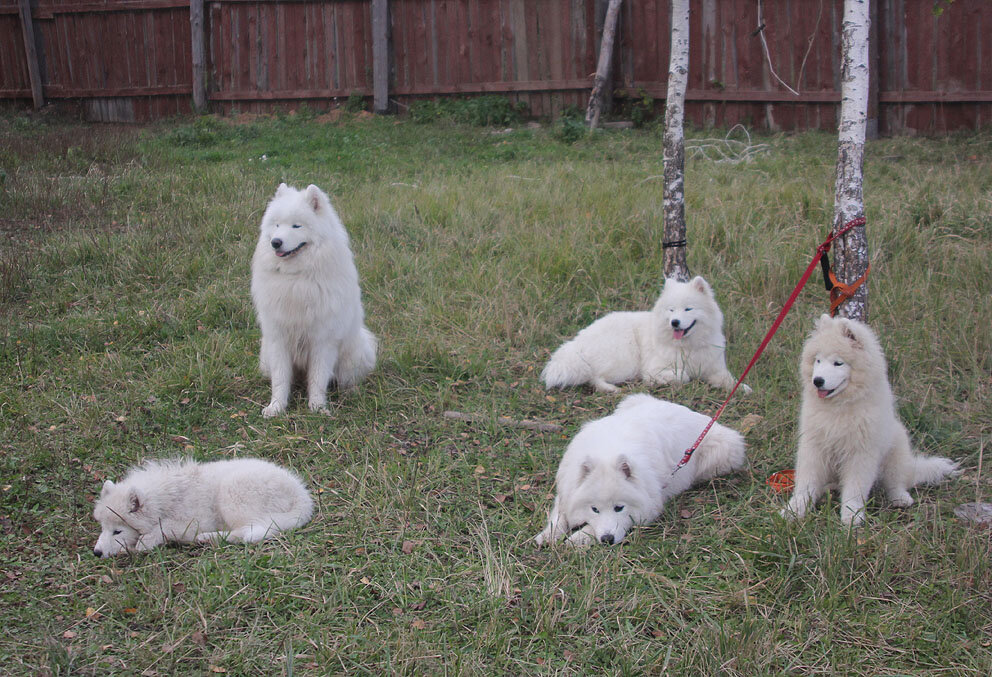 Недельные курсы повышения квалификации для собакообожак :-) Приглашаем всех!!! - Страница 2 0_7d730_7fa1301f_XXL
