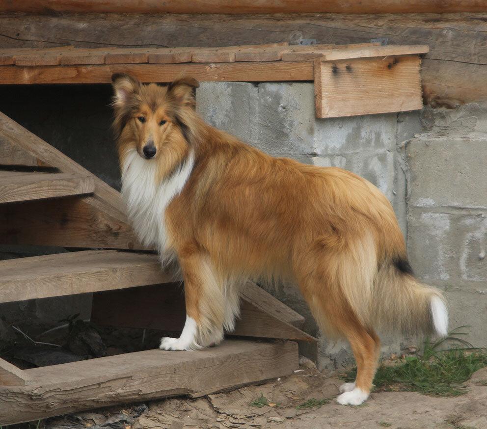 Недельные курсы повышения квалификации для собакообожак :-) Приглашаем всех!!! - Страница 2 0_7d76b_719733ef_XXL
