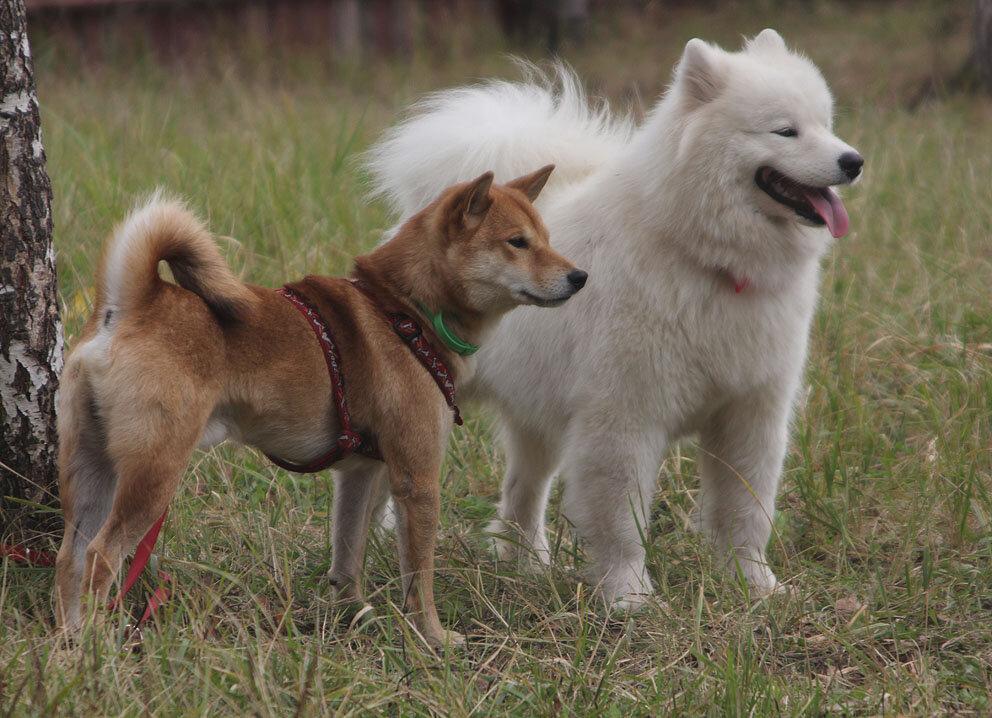 Недельные курсы повышения квалификации для собакообожак :-) Приглашаем всех!!! - Страница 3 0_7d780_7abc321b_XXL
