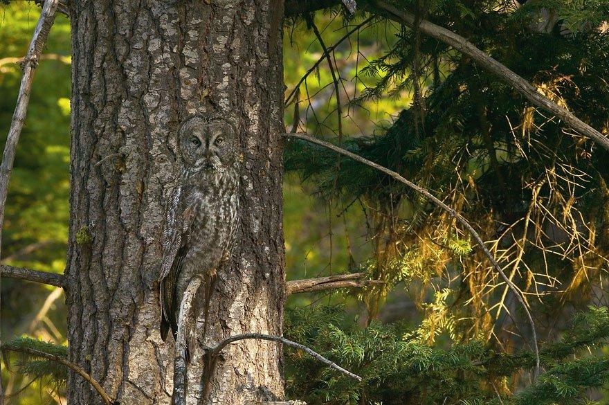 Маскировка 80 lvl. Фотопроект Арта Вульфа «Исчезновение»