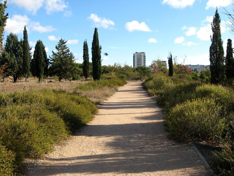 Аллея в парке победы в Севастполе