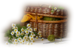 lizztish_basket-n-daisies1.png