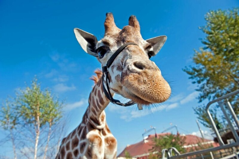 TOPSHOTS-GERMANY-ANIMAL-GIRAFFE