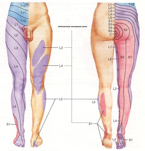 sciatica sintomi inguine