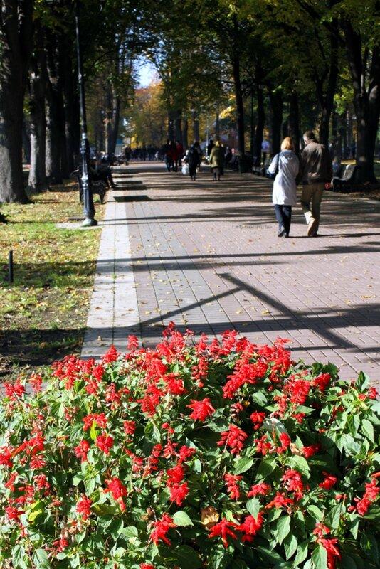 Цветы Мариинского парка
