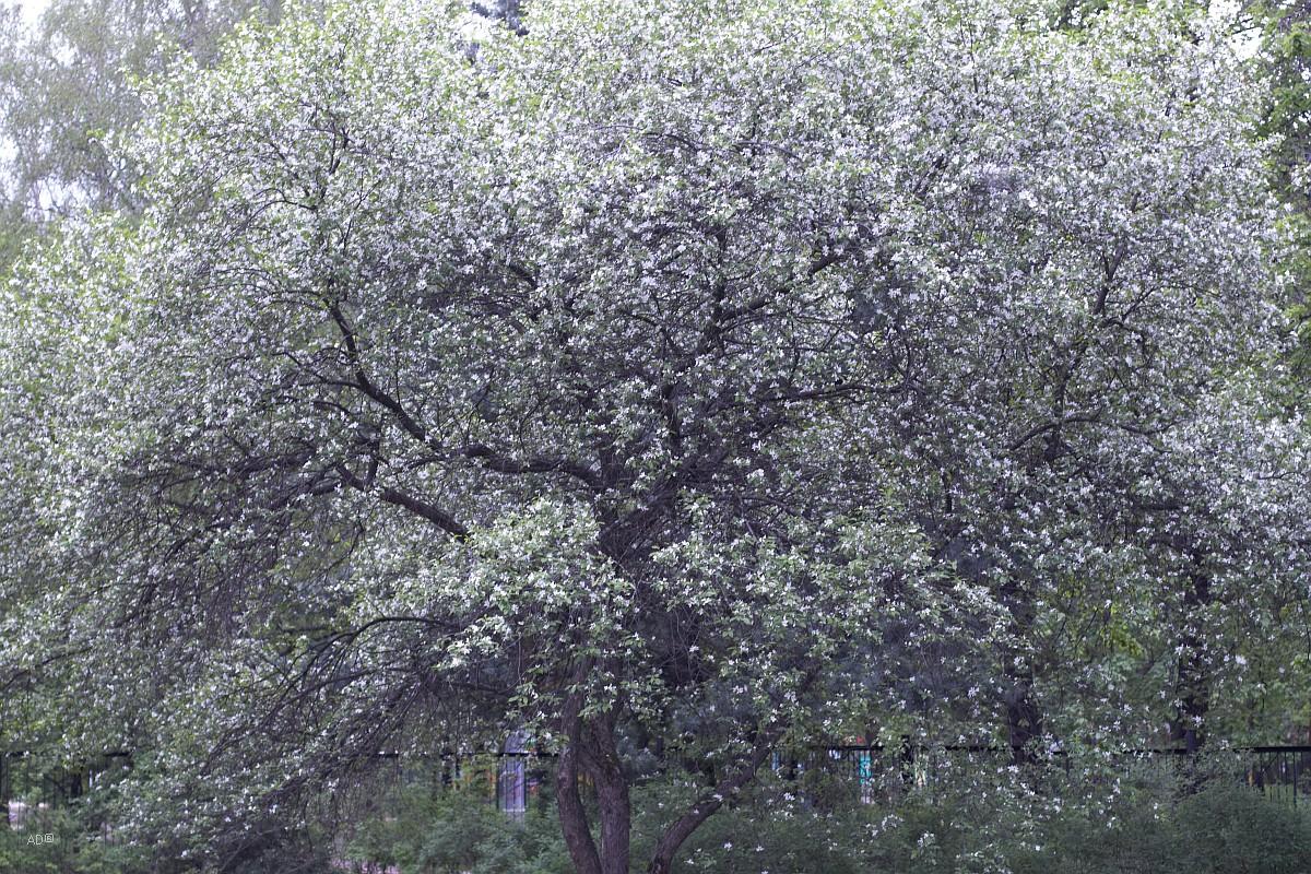 Розарий в Сокольниках