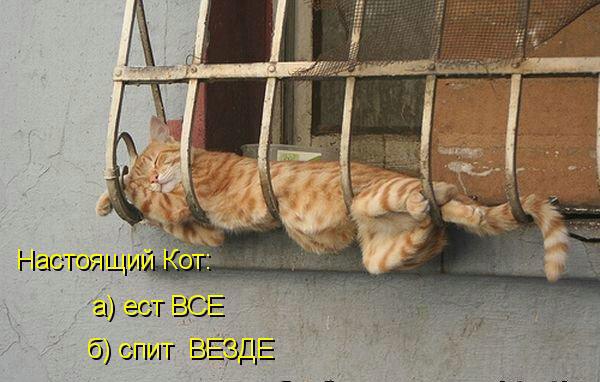 http://img-fotki.yandex.ru/get/6523/59709858.1d/0_ef6dc_f623acb3_XL.jpg