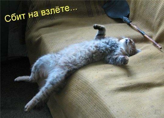 http://img-fotki.yandex.ru/get/6523/59709858.1d/0_ef6de_ecf4a7df_XL.jpg