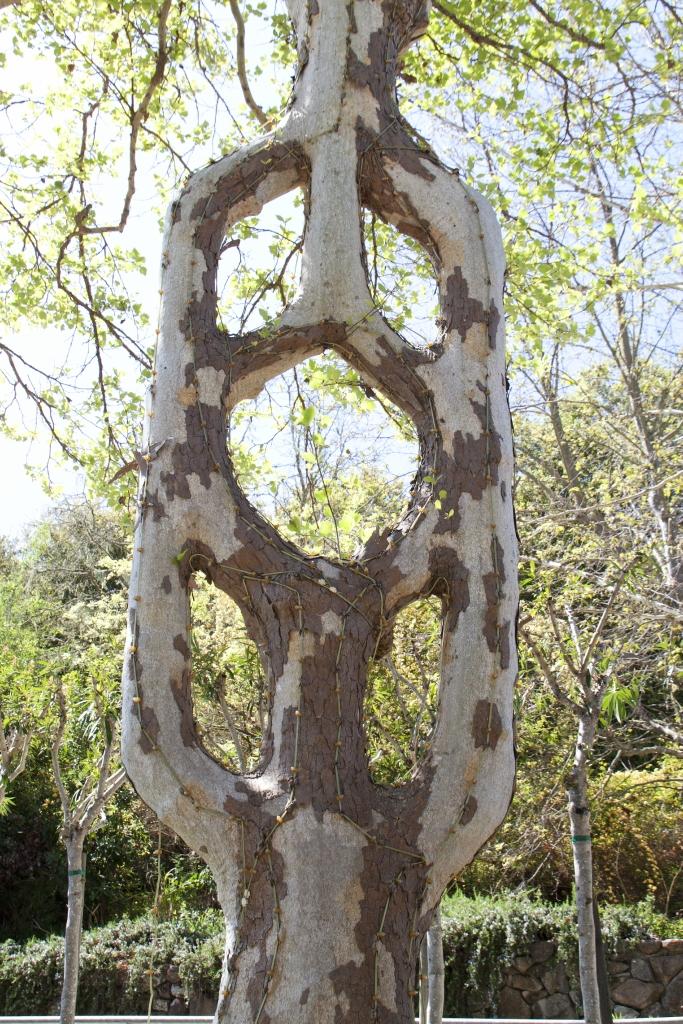 أشجار اكسل العجيبة 0_947a7_19ea502_orig