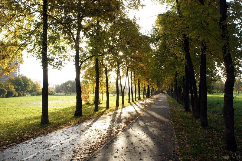 Велосипедист изнасиловал женщину вМуринском парке вПетербурге