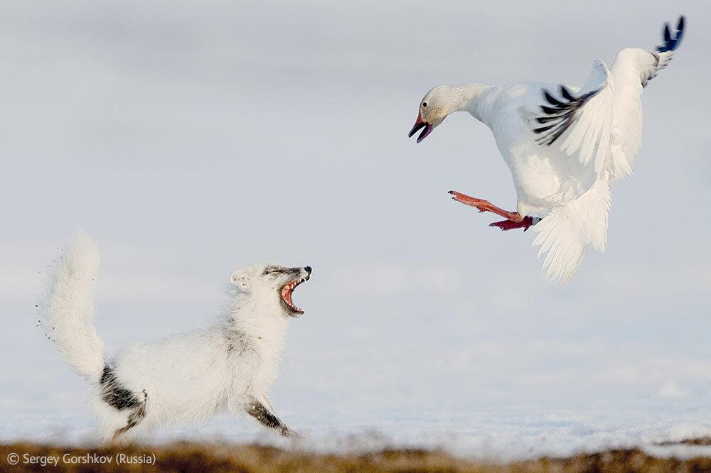 Wildlife Photographer