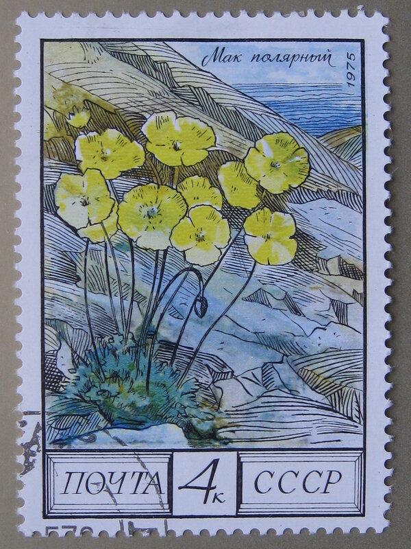 Мак полярный (Papaver radicatum)