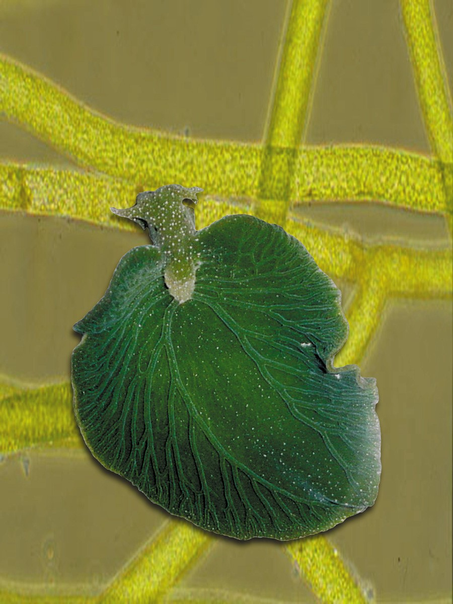 Наполовину животное и наполовину растение живая природа