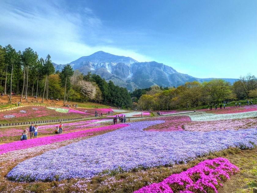 Цветущий розовым японский парк Хицудзияма. Фотографии 0 141ad5 864c73ef orig