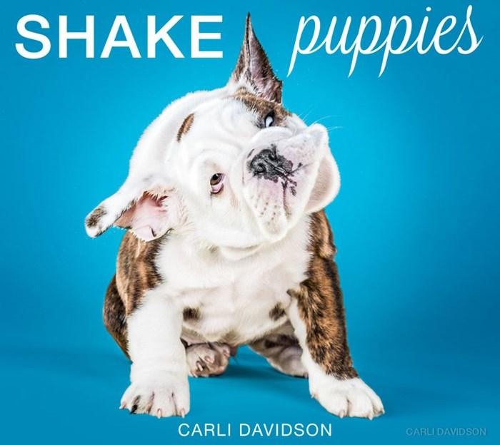 Карли Дэвидсон: Фото и видео отряхивающихся щенков разных пород