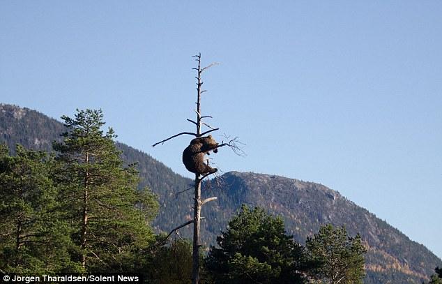 медведь осматривает свои владения