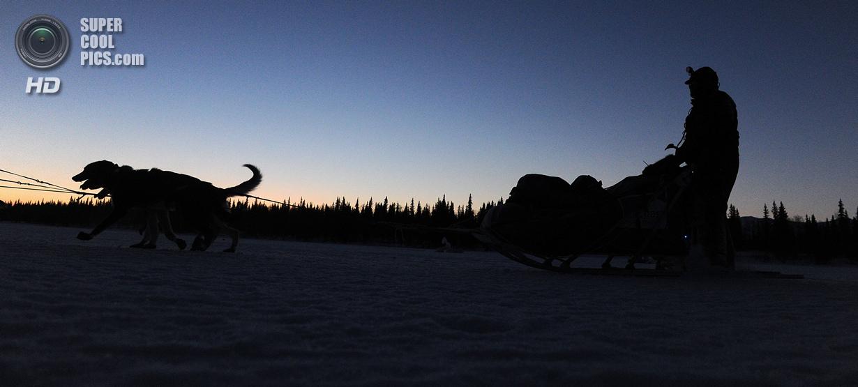США. Фингер-Лейк, Аляска. 3 марта. Собаки тянут упряжку Роберта Бундцена. (Bob Hallinen/Anchorage Da