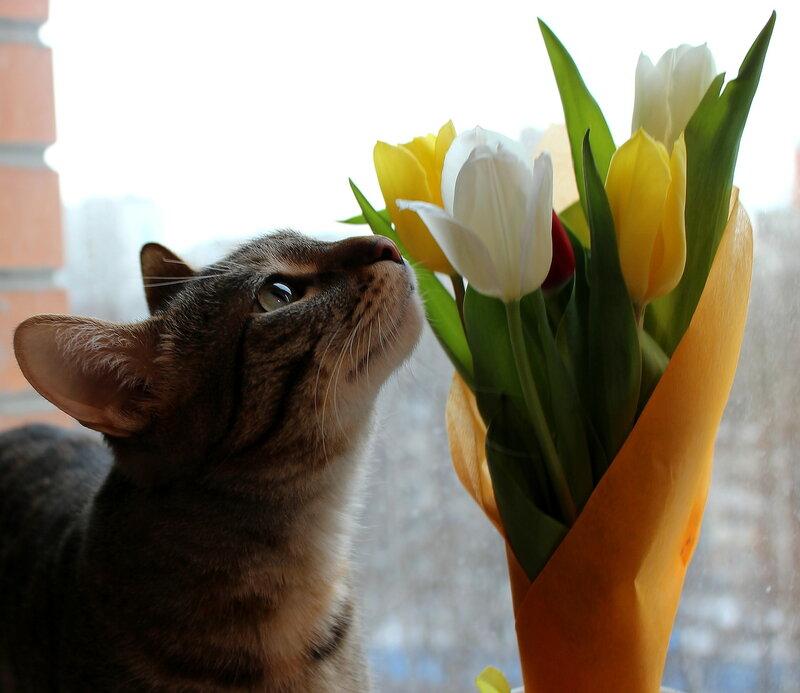 Весной пахнет
