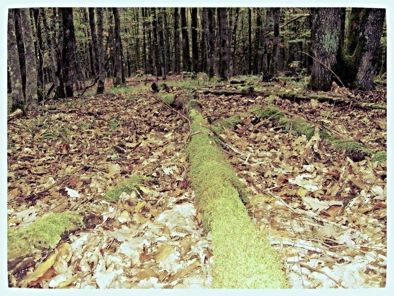 11 октября 2008, под Горячим Ключом, в лесу (5).JPG