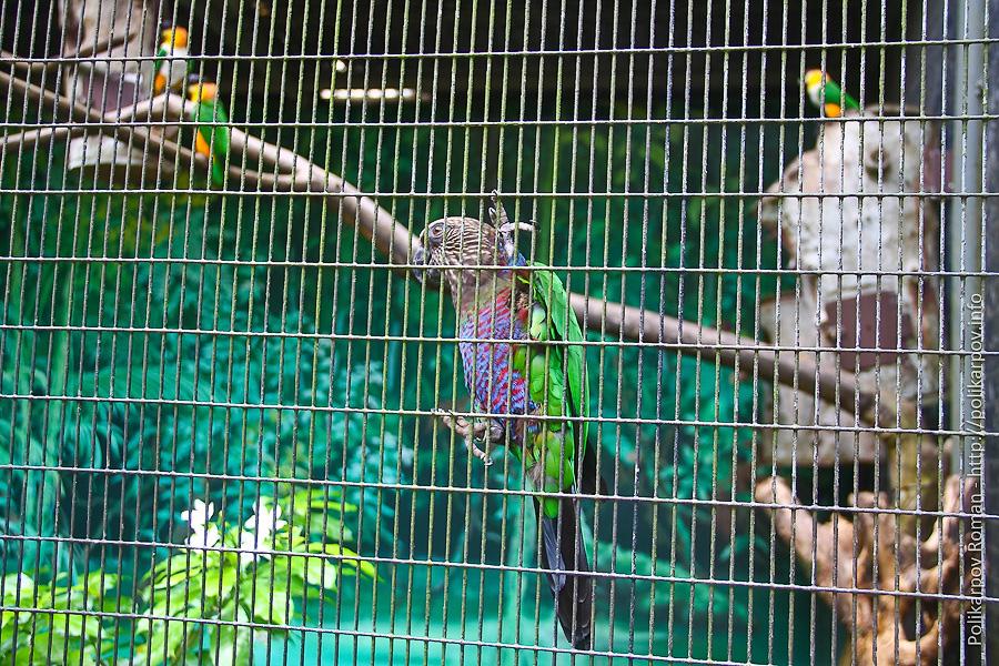 0 c4faf 883cb677 orig Парк птиц Jurong в Сингапуре