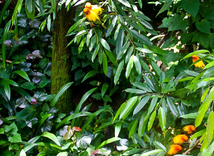 0 c4fcb 5f6ce555 orig Парк птиц Jurong в Сингапуре