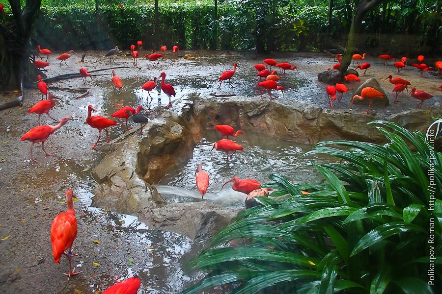 0 c4fdf 78ef3c09 orig Парк птиц Jurong в Сингапуре