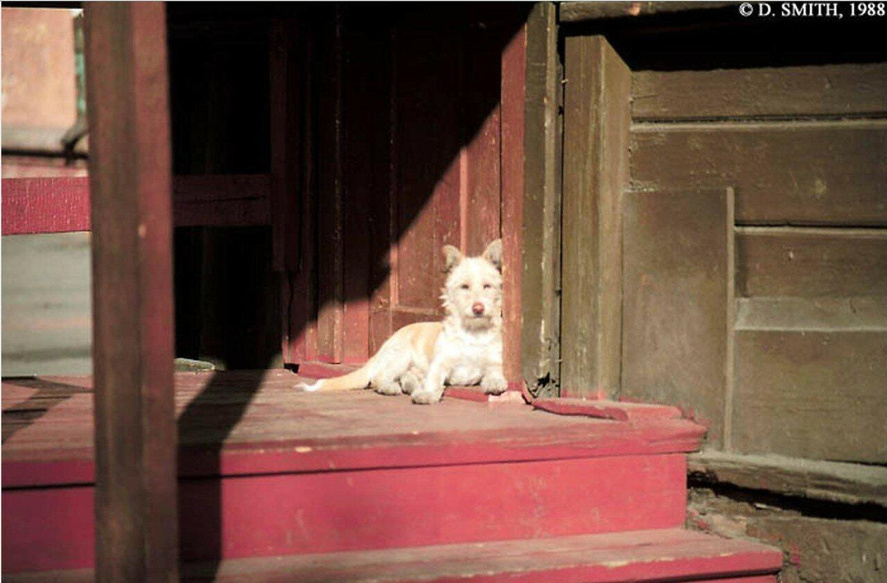 Собака на крыльце деревянного дома