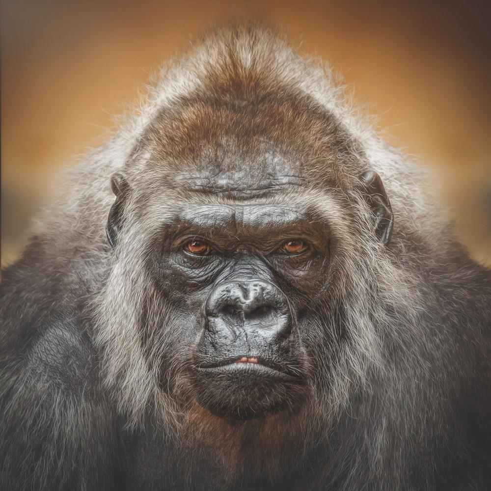 Выразительные портреты обезьян