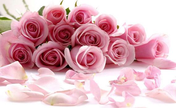 бутони рожевих троянд