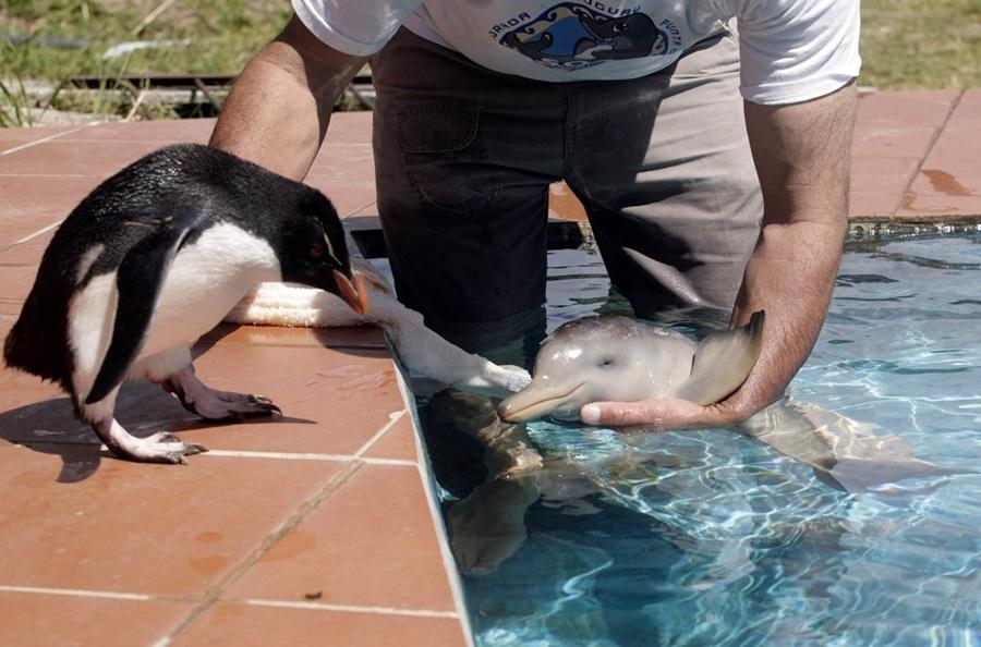 Пингвин, друг маленького дельфина (фото)