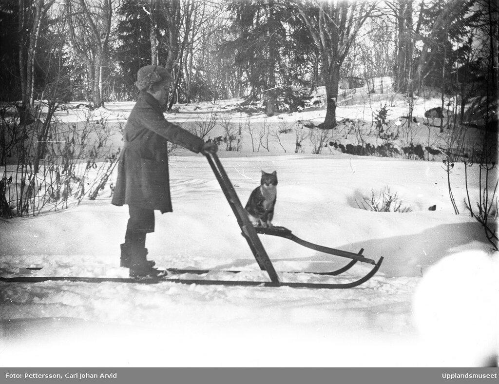 Barn och katt pa spark, sannolikt Funbo socken, Uppland, 1910 - 1950,  Pettersson, Carl Johan Arvid.jpg
