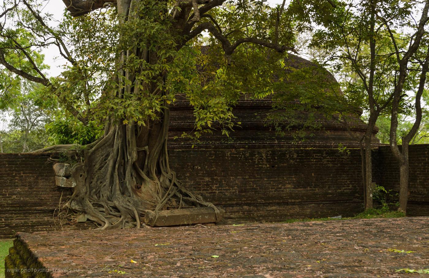 Фото 12. Интересные места на Шри-Ланке. Ступа рядом с крематорием в археологическом комплексе Polonnaruwa.