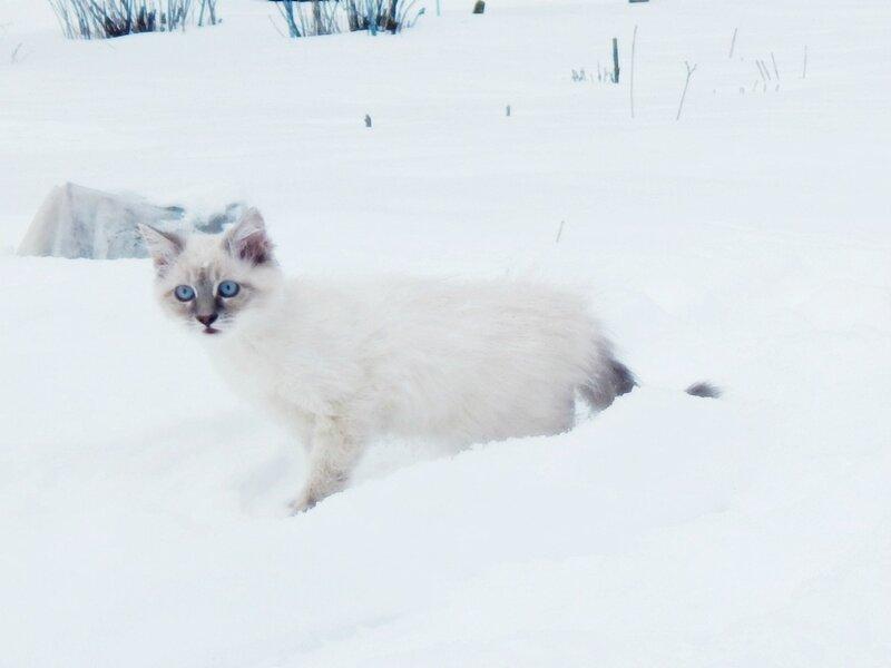 Одна в снегу