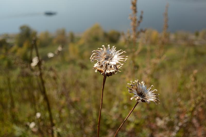 цветы из серебра 2