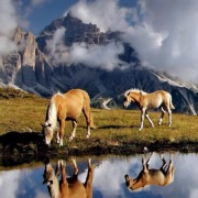 Кони у водоема