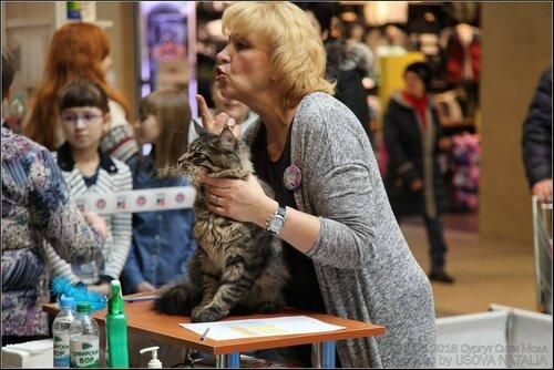 """Международная выставка кошек AFC """"Удивительные кошки"""", 6 марта 2016, Сургут (Россия) - Страница 2 0_12e372_270eb608_L"""