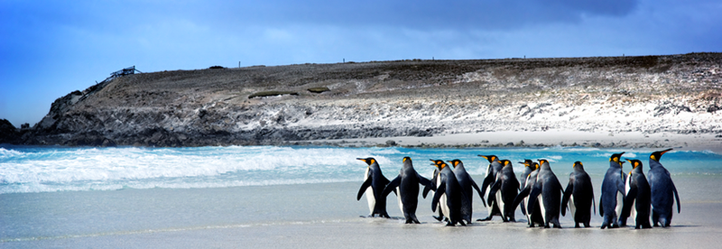 slider_penguins.png