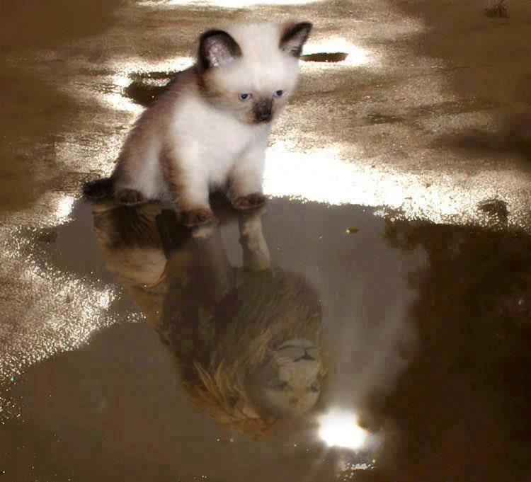 я-кошка-4.jpg