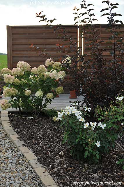 Rosa Kew Gardens (76).JPG