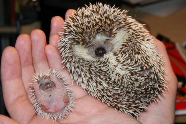 Самое прелестные новорожденные – трогательные фото