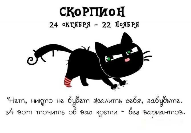 год кота под знаком скорпиона
