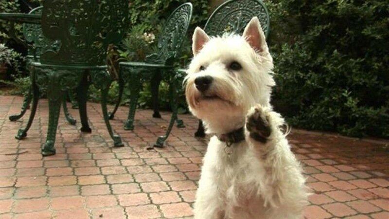 Собака выдала хозяина судебным приставам под Новокузнецком