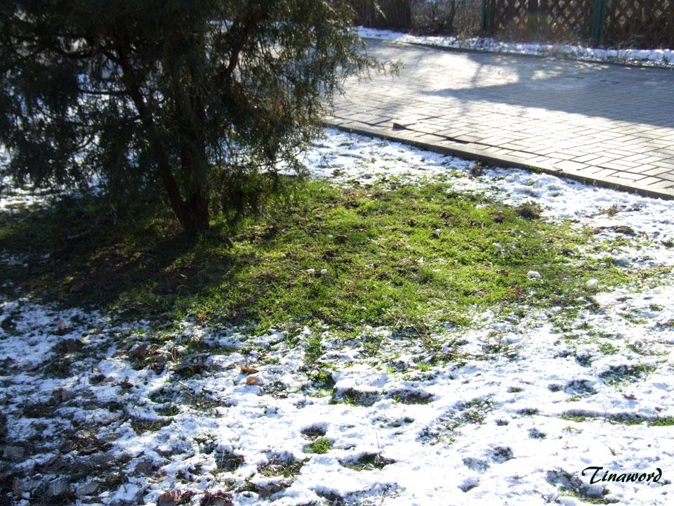 зеленая-трава-3.jpg