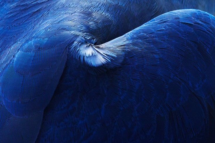 «Птицы» Томаса Лора (Thomas Lohr) (9 фото)