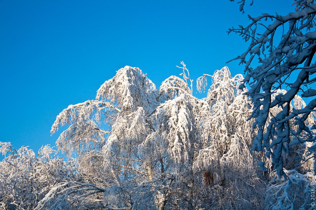 Зима на кумысной поляне 2