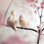 Белые голуби на ветке